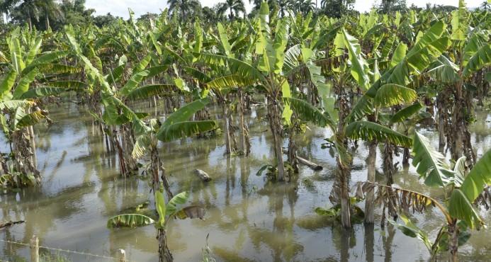 Inundaciones dejan pérdidas millonarias en República Dominicana