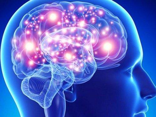 Mejores hierbas y especias para tu cerebro