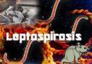 LEPTOSPIROSIS ATACA A RD; 20 personas han muerto este año según Salud Publica