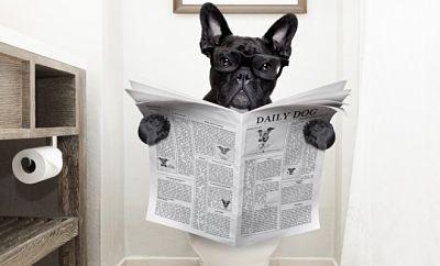 Cómo tratar a un perro con diarrea