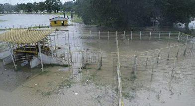 Ganaderos y arroceros realizan levantamiento de daños causados por huracán María