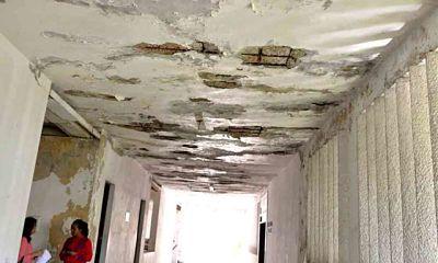 Hongos y bacterias: amenaza escondida en las edificaciones