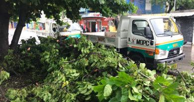 Dirección de Combate de Plagas Tropicales delMOPC