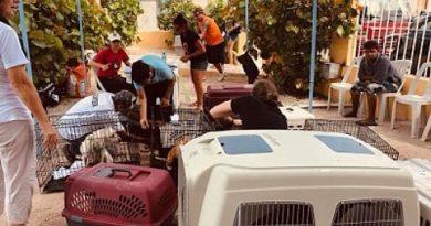 Royalton y Grand Memories Punta Cana apoyan a la Fundación Rescátame Punta Cana para operativo canino