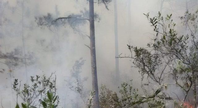 Autoridades dominicanas combaten un incendio forestal en zona de Pedernales